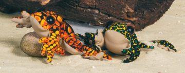 Sandtier - Frosch