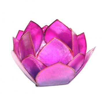 Lotus-Licht Abendsonne violett