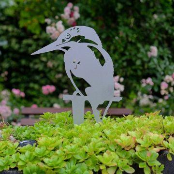 Beetstecker Eisvogel